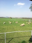 GW羊が丘こうえん3