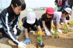 小学校・花植え (16)