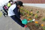 小学校・花植え (19)