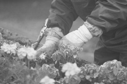 花いっぱい 啓明 (31)2