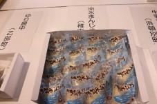 飛び込め(報告会) (2)